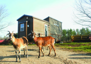 Goats mug for the camera in front of Tiny House Crafters' Nova design. (Contributed photo)