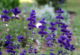 Summer Care for Perennial Gardens