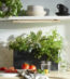 Plants for Every Room of Your Home